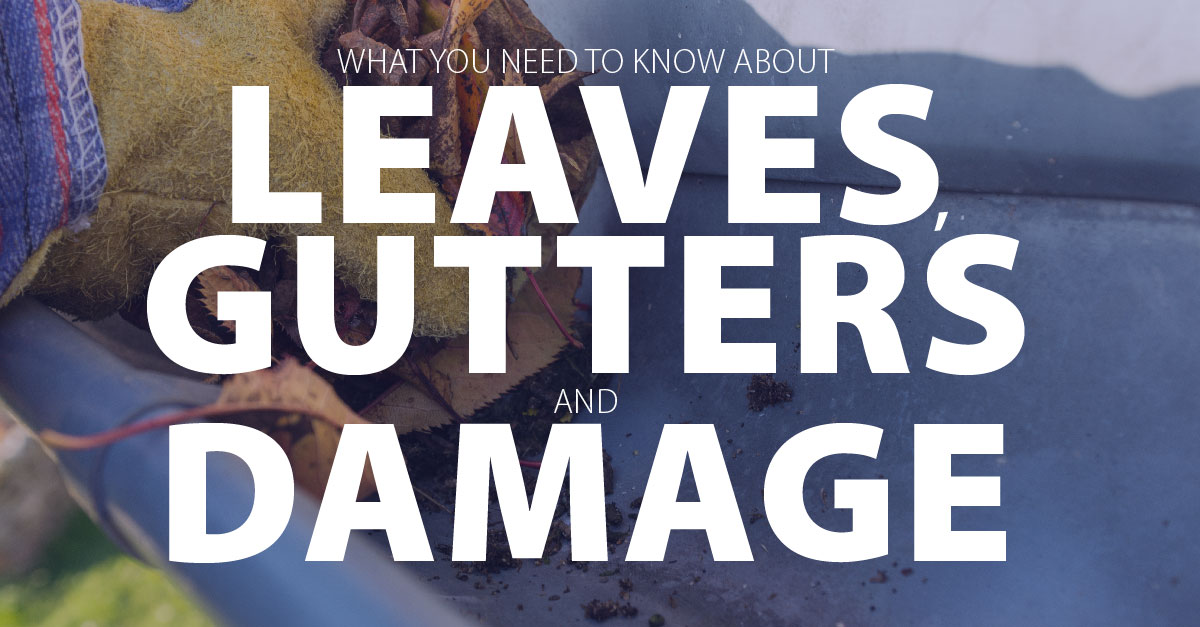 What You Need to Know About Leaves, Gutters, and Damage