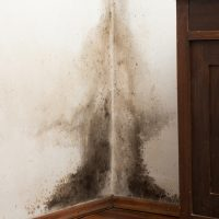 The Dangers of Mold & Mildew in Your Home
