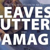 What You Need to Know About Leaves, Gutters and Damage