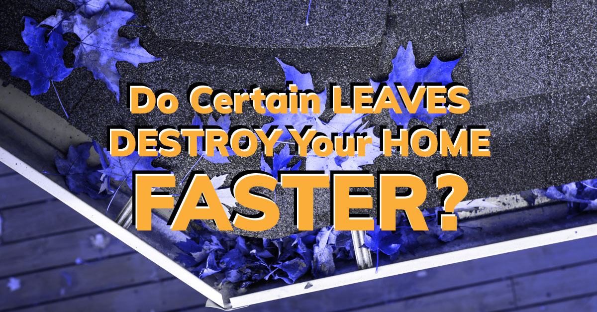 Do Certain Leaves Destroy Your Home Faster?